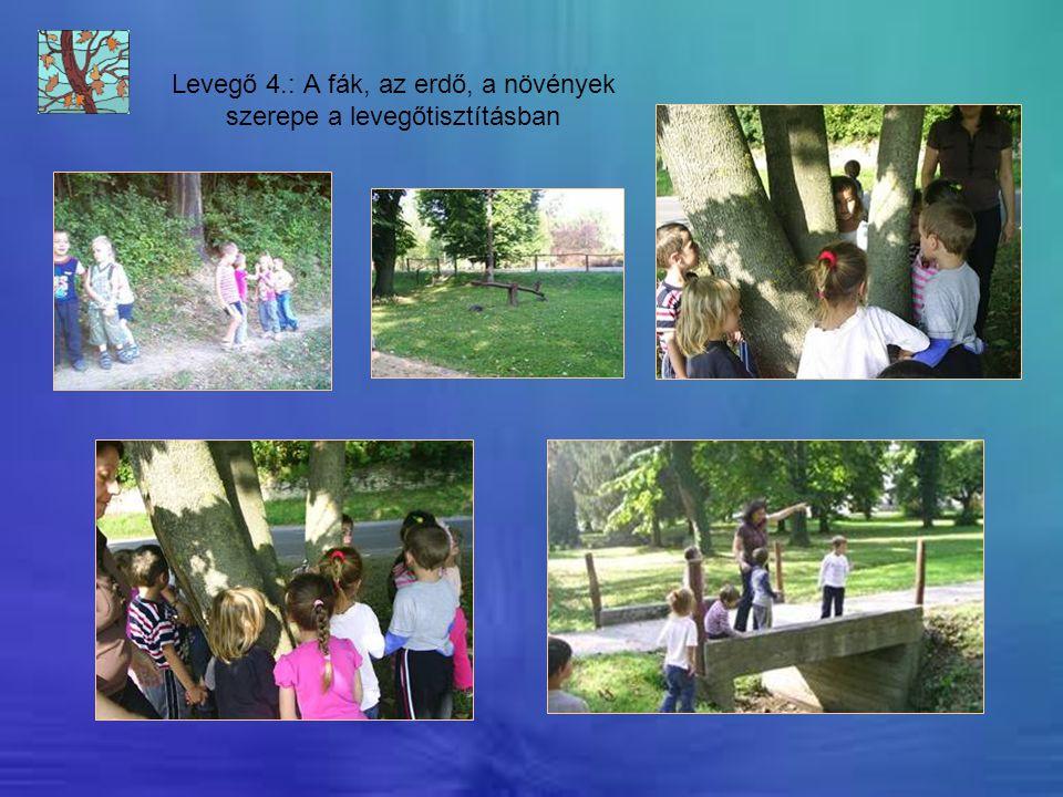 Levegő 4.: A fák, az erdő, a növények szerepe a levegőtisztításban