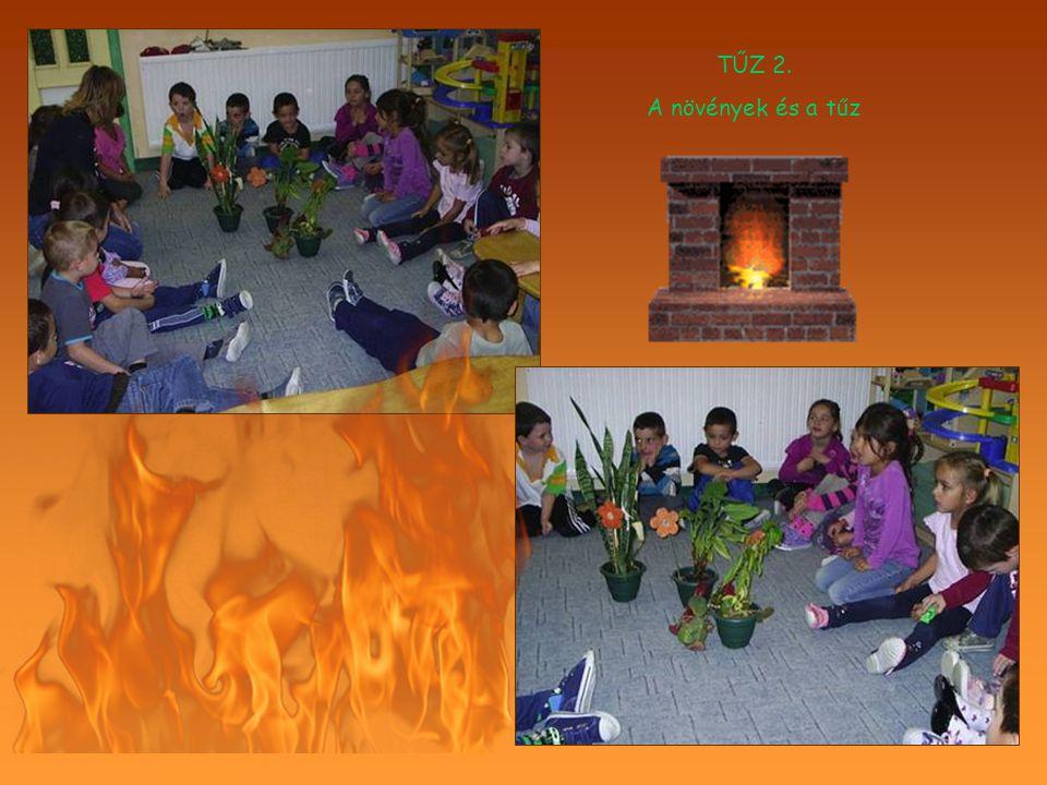 TŰZ 2. A növények és a tűz