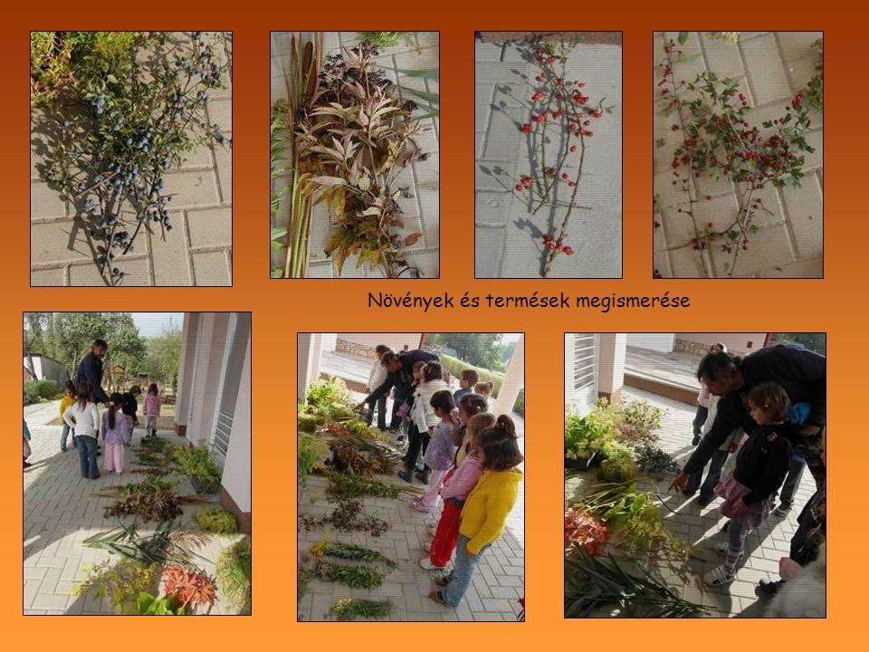 Növények és termések megismerése