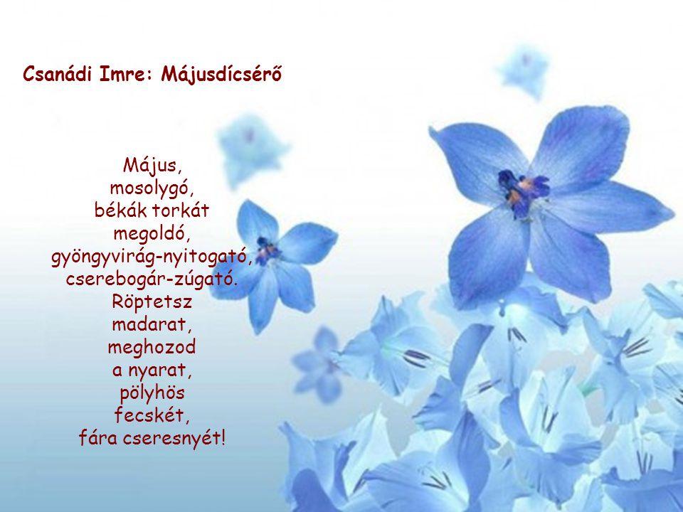 Csanádi Imre: Májusdícsérő Május, mosolygó, békák torkát megoldó, gyöngyvirág-nyitogató, cserebogár-zúgató. Röptetsz madarat, meghozod a nyarat, pölyh