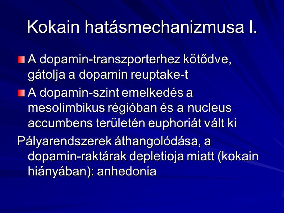 Kokain hatásmechanizmusa I. A dopamin-transzporterhez kötődve, gátolja a dopamin reuptake-t A dopamin-szint emelkedés a mesolimbikus régióban és a nuc
