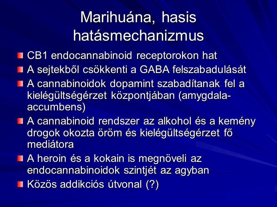 Marihuána, hasis hatásmechanizmus CB1 endocannabinoid receptorokon hat A sejtekből csökkenti a GABA felszabadulását A cannabinoidok dopamint szabadítanak fel a kielégültségérzet központjában (amygdala- accumbens) A cannabinoid rendszer az alkohol és a kemény drogok okozta öröm és kielégültségérzet fő mediátora A heroin és a kokain is megnöveli az endocannabinoidok szintjét az agyban Közös addikciós útvonal (?)