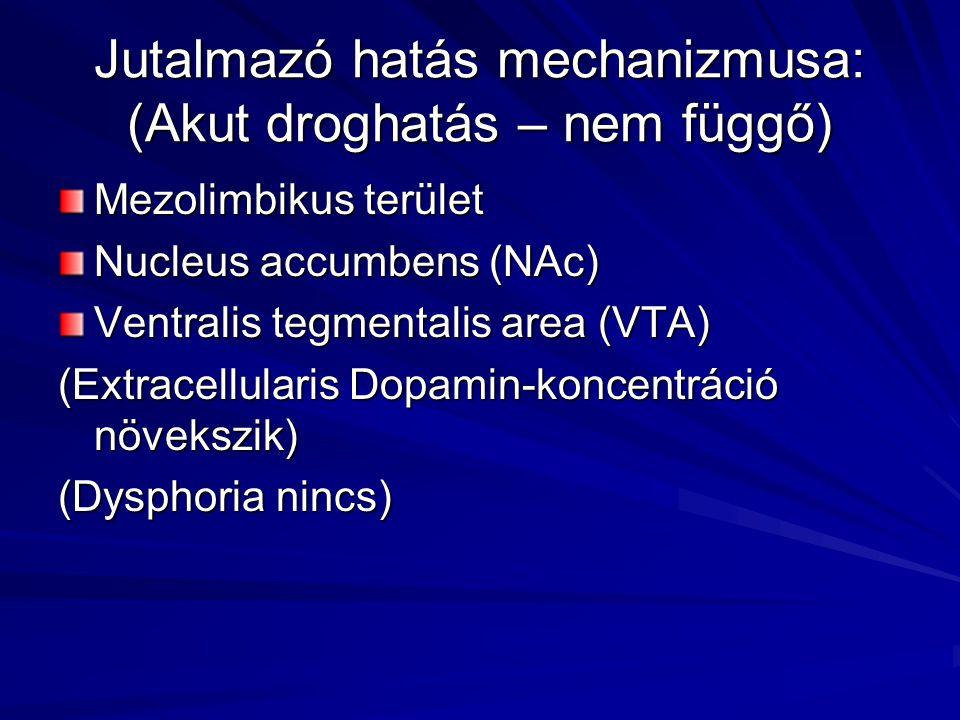 Jutalmazó hatás mechanizmusa: (Akut droghatás – nem függő) Mezolimbikus terület Nucleus accumbens (NAc) Ventralis tegmentalis area (VTA) (Extracellularis Dopamin-koncentráció növekszik) (Dysphoria nincs)
