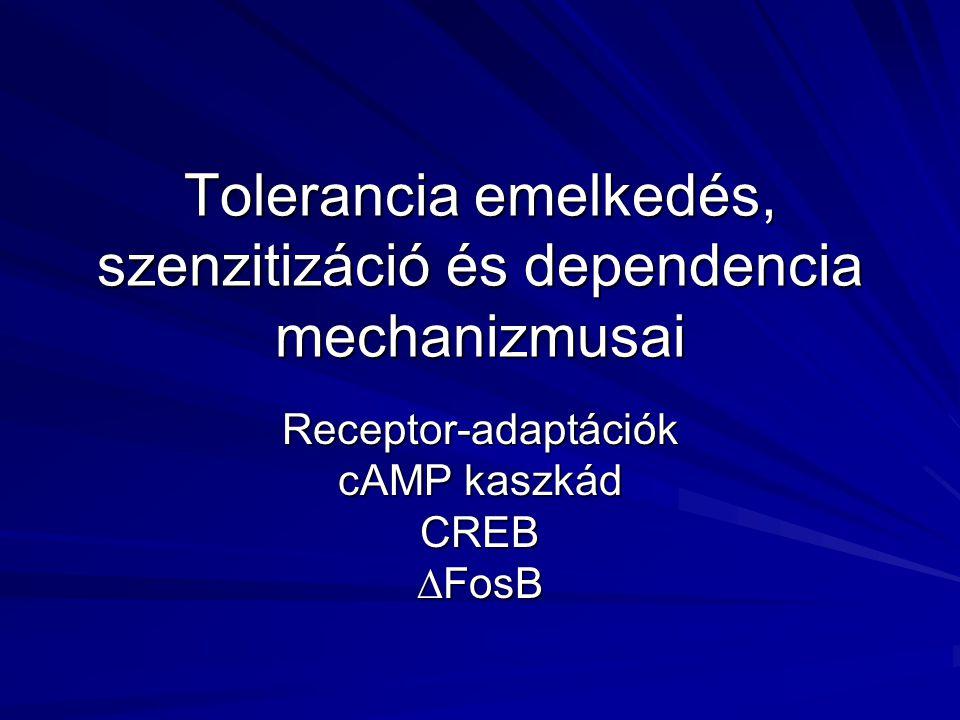 Tolerancia emelkedés, szenzitizáció és dependencia mechanizmusai Receptor-adaptációk cAMP kaszkád CREB∆FosB