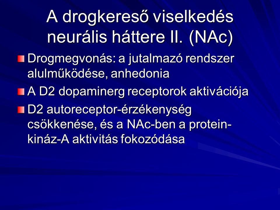 A drogkereső viselkedés neurális háttere II. (NAc) Drogmegvonás: a jutalmazó rendszer alulműködése, anhedonia A D2 dopaminerg receptorok aktivációja D