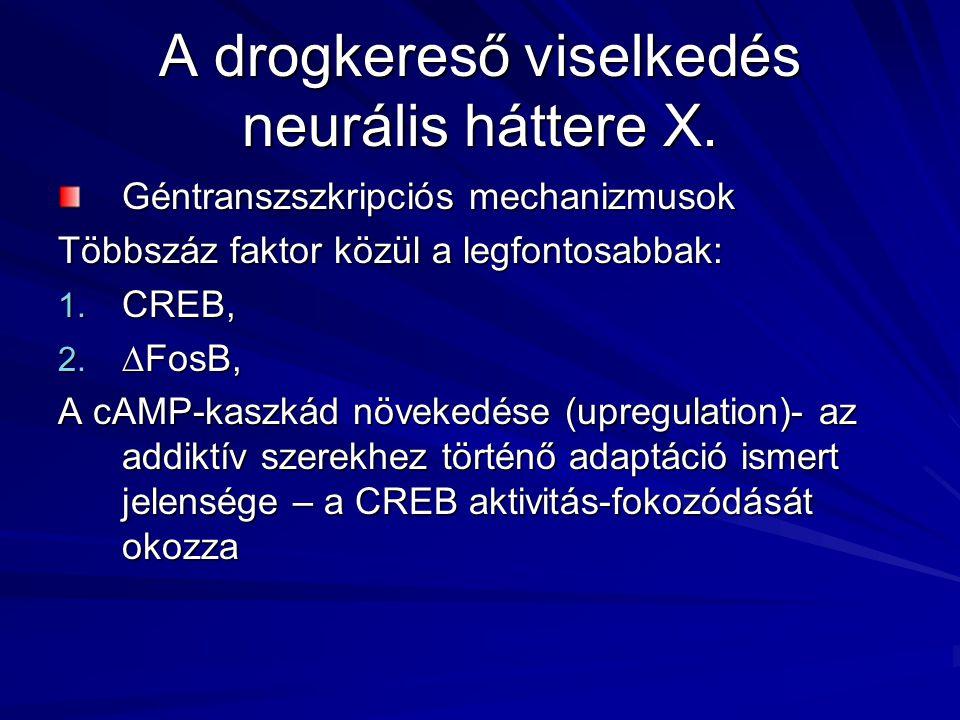 A drogkereső viselkedés neurális háttere X. Géntranszszkripciós mechanizmusok Többszáz faktor közül a legfontosabbak: 1. CREB, 2. ∆FosB, A cAMP-kaszká