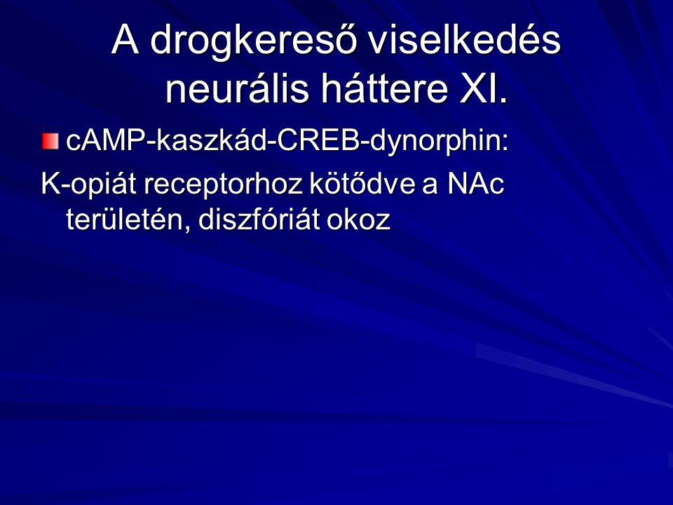 A drogkereső viselkedés neurális háttere XI. cAMP-kaszkád-CREB-dynorphin: K-opiát receptorhoz kötődve a NAc területén, diszfóriát okoz