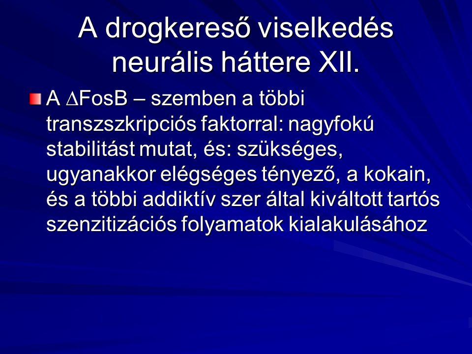 A drogkereső viselkedés neurális háttere XII. A ∆FosB – szemben a többi transzszkripciós faktorral: nagyfokú stabilitást mutat, és: szükséges, ugyanak