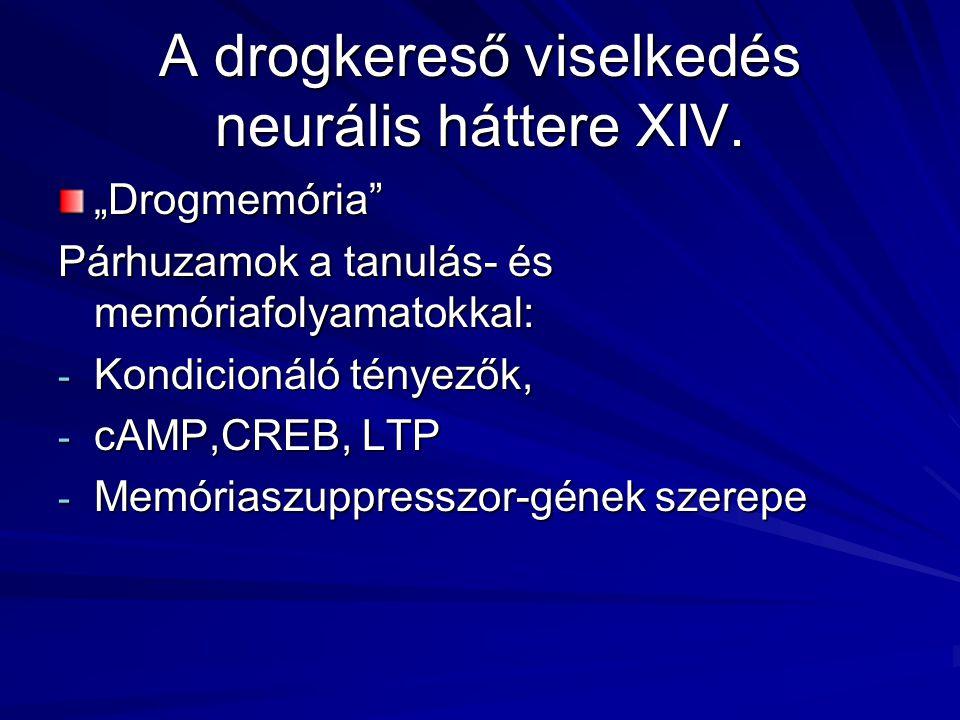 """A drogkereső viselkedés neurális háttere XIV. """"Drogmemória"""" Párhuzamok a tanulás- és memóriafolyamatokkal: - Kondicionáló tényezők, - cAMP,CREB, LTP -"""