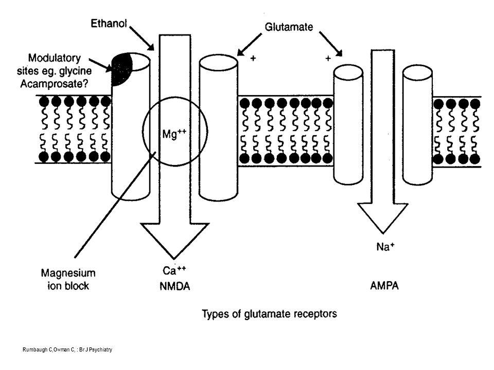 BDZ receptorok ( PET scan ) Meyer JS, Quenzer LF: Psychopharmacology, 2005