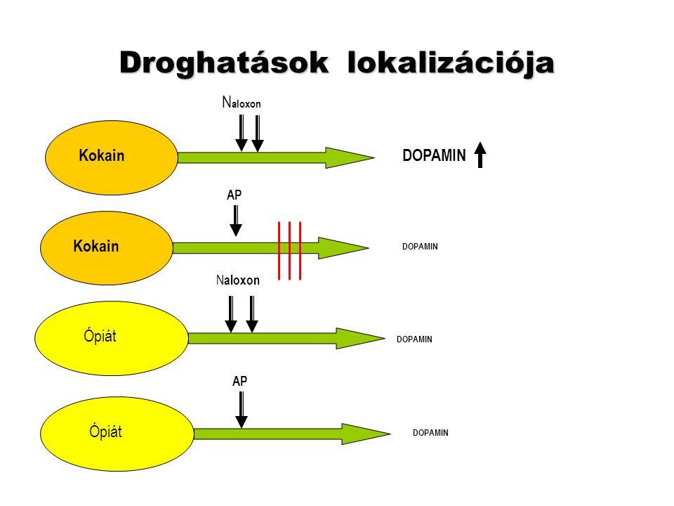 Az eufória anatómiája (SZÉKELY J: ábrája) ventralis tegmentalis area nucleus accumbens ventralis pallidum LH LC PAG PFC DMT PPNamygdala hippocampus dopamin GABA ACh LH lat.
