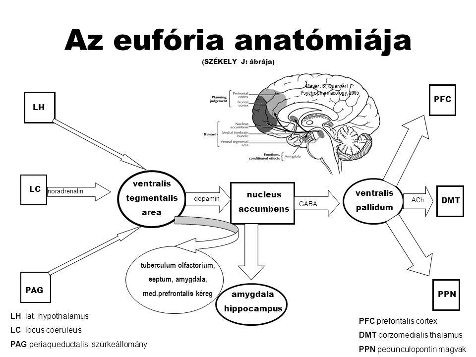 ANATÓMIA és FUNKCIÓ Nucleus accumbens azonnali megerősítő hatás,jutalmazásra való emlékezés, drogmegvonás során fellépő csökkent mesolimbikus DA aktivitás és a következményes averzív állapot kialakulás Ventralis tegmentalis area jutalmazás előrejelzése Prefrontalis kéreg döntéshozatal, kockázat-megítélés Amigdala-gyrus cinguli- hippocampus érzelmileg hangsúlyos emlékezés, motiváció