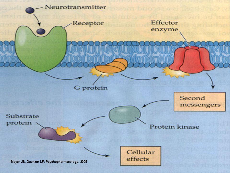 Pszichostimulánsok DNS Cannabinoidok (CB-1) Opiátok (  opioid) Dopamin ( D 1 / D 2 )  Na + Ca 2 + ATP cAMP Alkohol(etanol) Gi/o GPCR AC Gs/olf sejtmembrán citoplasma sejtmag Cl - Ca 2 + TRANSZKRIPCIÓS FAKTOROK: CREB,JUN,FOS,  FOSB PROTEIN KINÁZOK AKTIVÁLÁSA Alkohol Barbiturát BDZ GABA A PCP Barbiturát Alkohol NMDA A főbb drogok molekuláris támadáspontjai