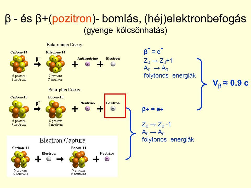 β - - és β+(pozitron)- bomlás, (héj)elektronbefogás (gyenge kölcsönhatás) β - = e - Z 0 → Z 0 +1 A 0 → A 0 folytonos energiák β+ = e+ Z 0 → Z 0 -1 A 0