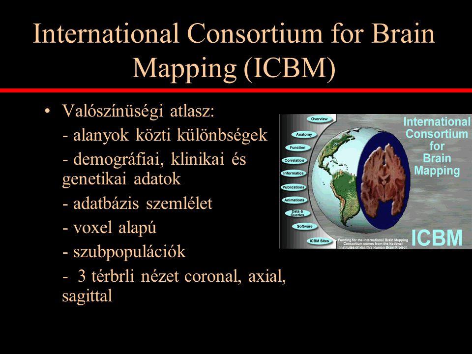 International Consortium for Brain Mapping (ICBM) Valószínüségi atlasz: - alanyok közti különbségek - demográfiai, klinikai és genetikai adatok - adat
