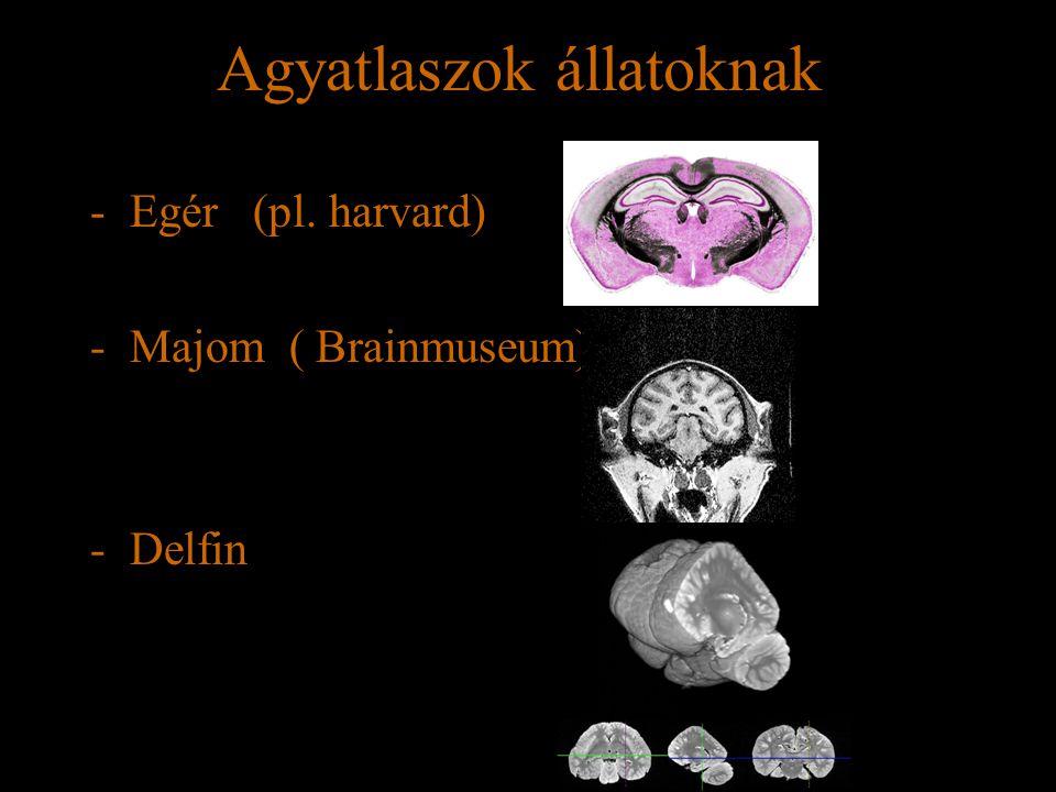 Agyatlaszok állatoknak -Egér (pl. harvard) -Majom ( Brainmuseum) -Delfin