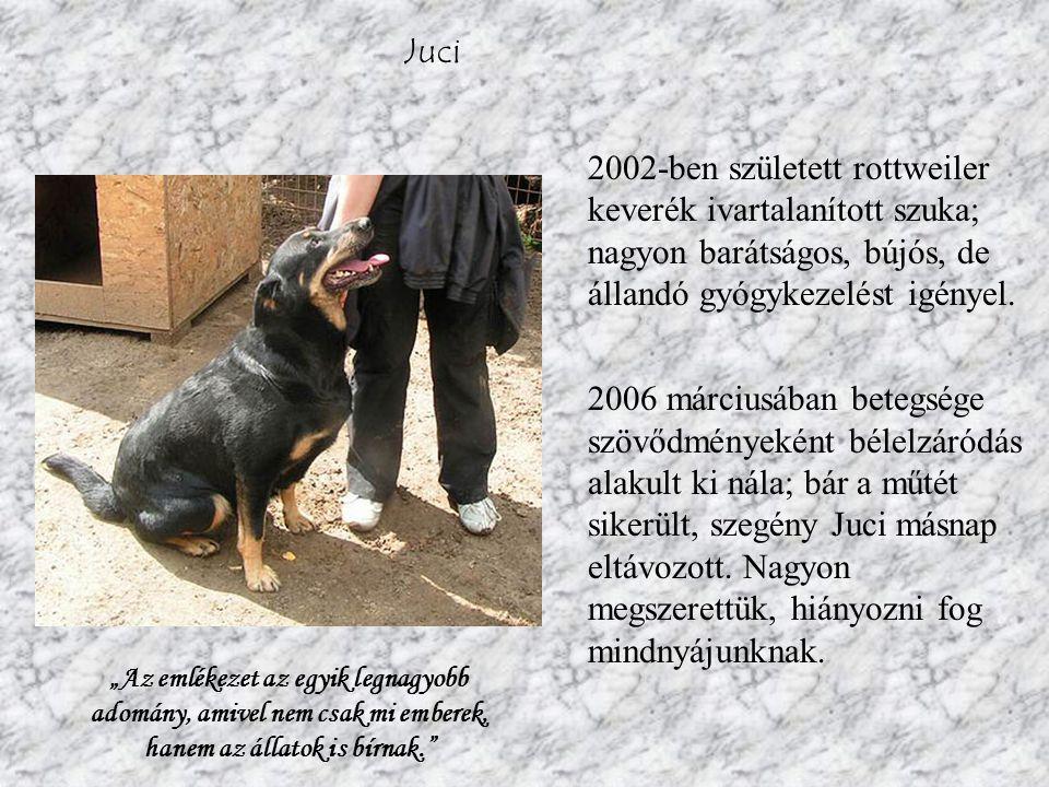 Juci 2002-ben született rottweiler keverék ivartalanított szuka; nagyon barátságos, bújós, de állandó gyógykezelést igényel.