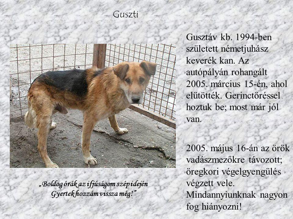 Guszti Gusztáv kb.1994-ben született németjuhász keverék kan.