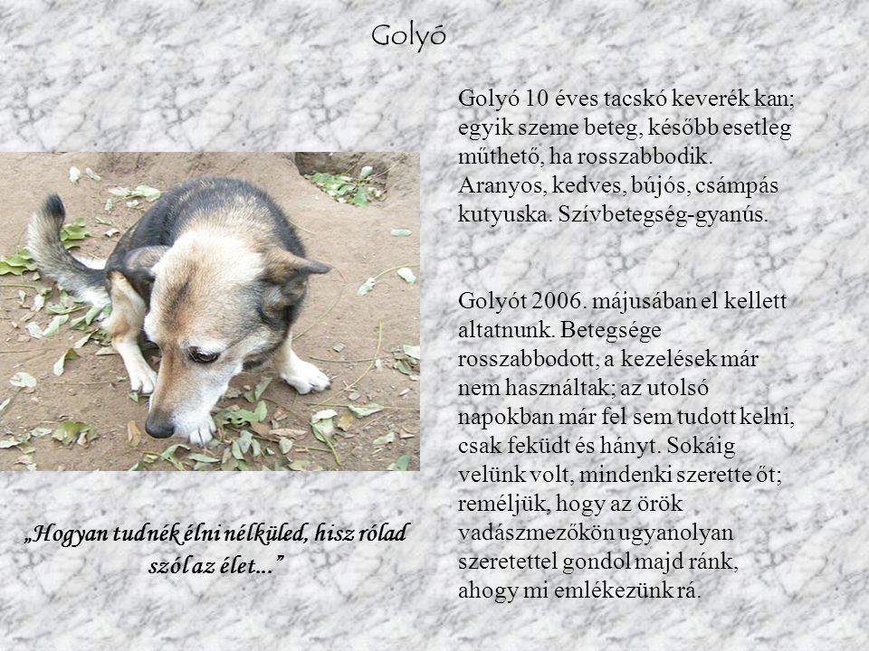 Golyó Golyó 10 éves tacskó keverék kan; egyik szeme beteg, később esetleg műthető, ha rosszabbodik.