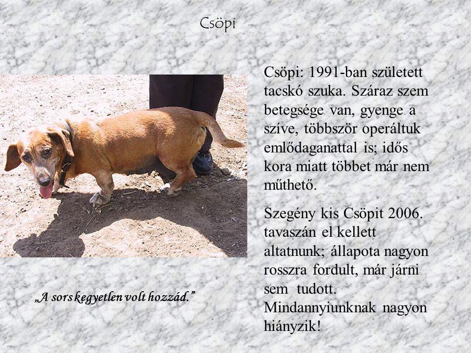 Csöpi Csöpi: 1991-ban született tacskó szuka.