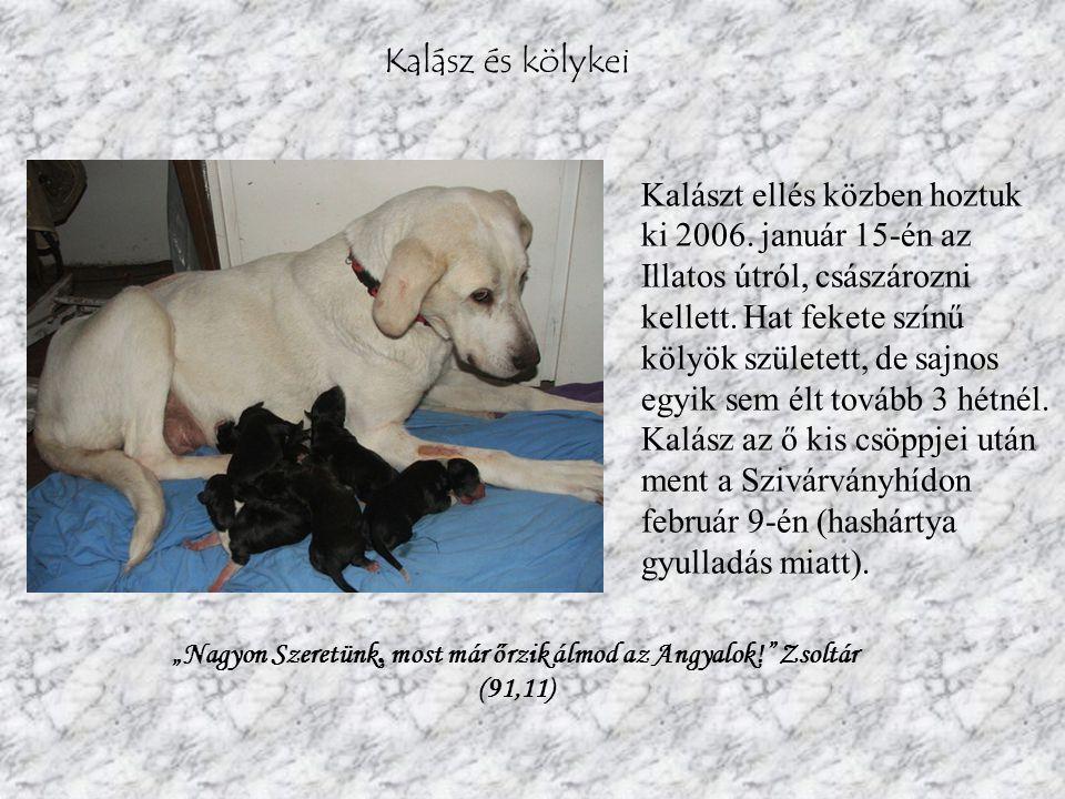 Matyi Matyi 2003-ban született francia bulldog kan; rengeteg egészségügyi problémája van, többek között súlyos veseelégtelenségben is szenved.