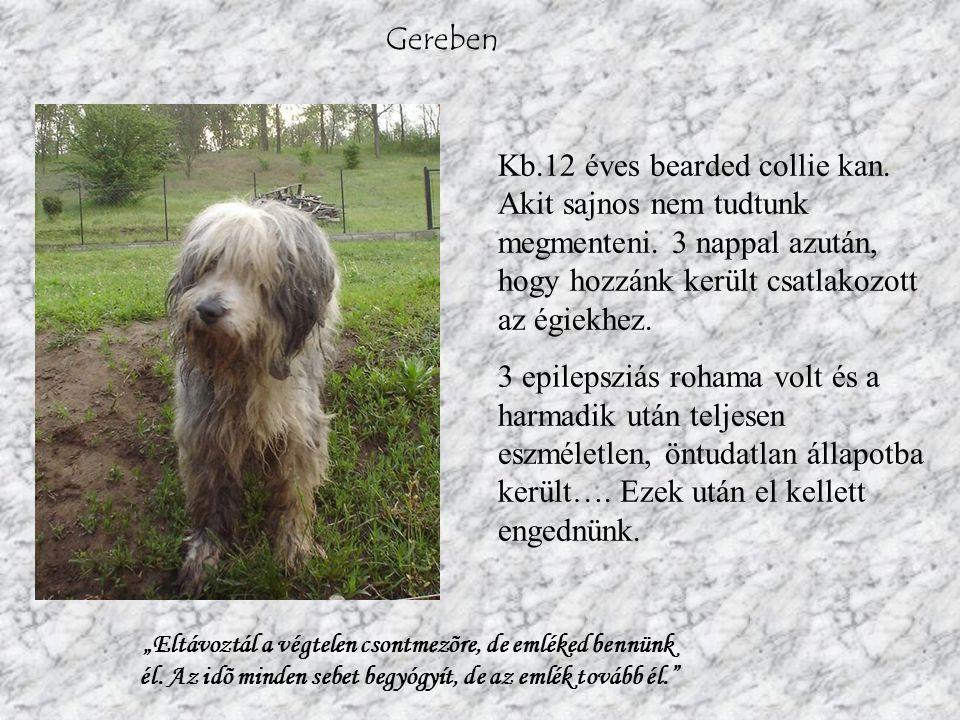 Frici 3-4 éves, bizalmatlan, gödörásó kan.2000 óta van az állatotthonban.