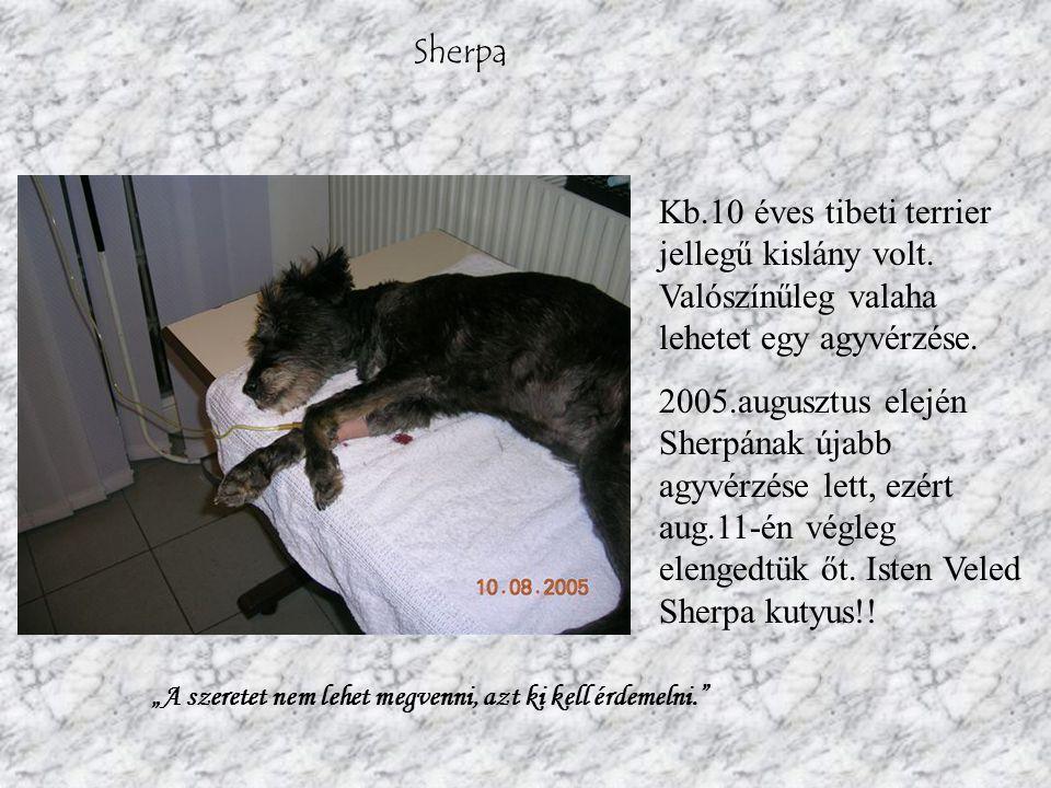 Sherpa Kb.10 éves tibeti terrier jellegű kislány volt.