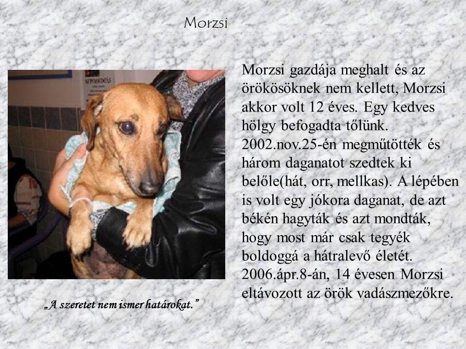 Morzsi Morzsi gazdája meghalt és az örökösöknek nem kellett, Morzsi akkor volt 12 éves.