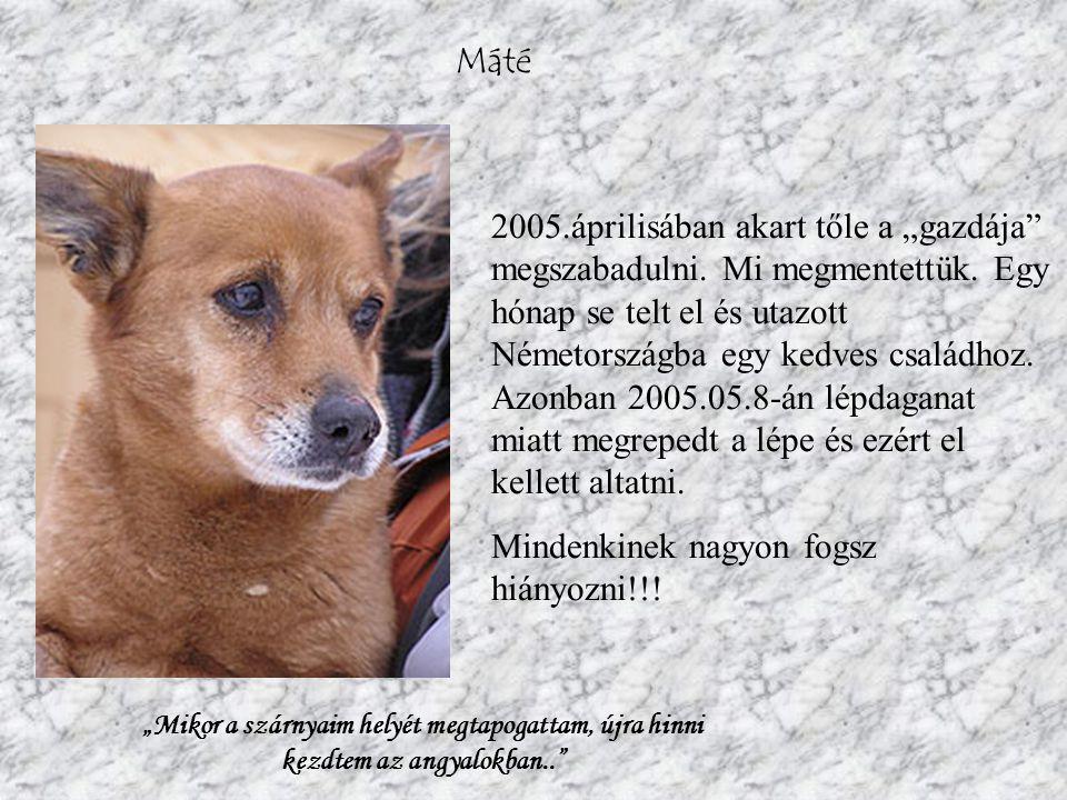 Azúr Azúr cica 2007.májusi születésű, félhosszú szőrű, orosz kék jellegű kandúr kiscica.