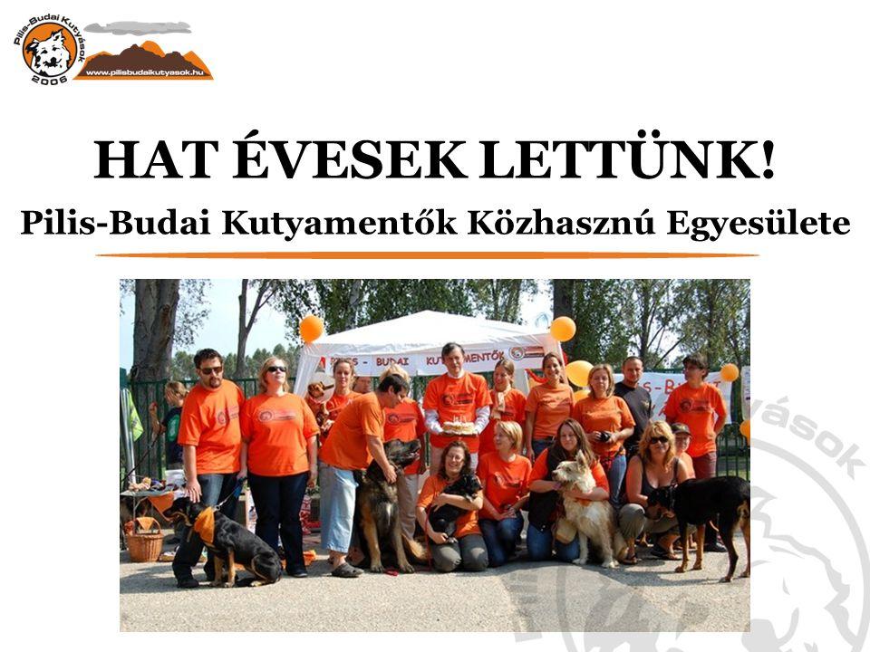 HAT ÉVESEK LETTÜNK! Pilis-Budai Kutyamentők Közhasznú Egyesülete