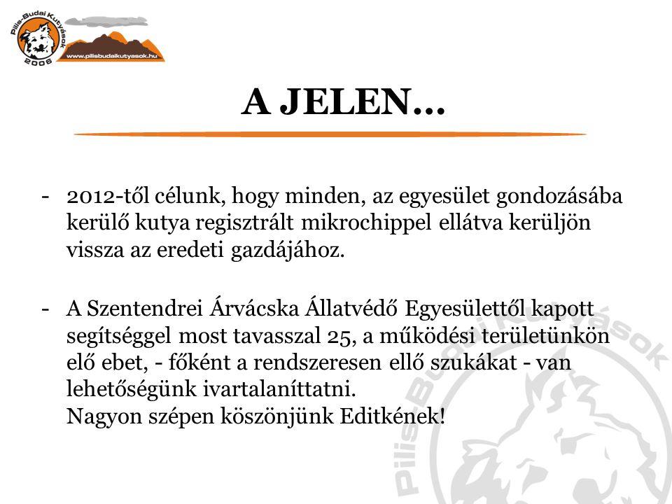 A JELEN… -2012-től célunk, hogy minden, az egyesület gondozásába kerülő kutya regisztrált mikrochippel ellátva kerüljön vissza az eredeti gazdájához.