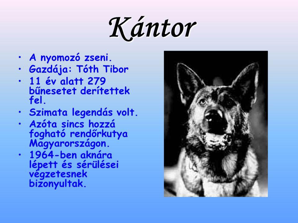Kántor A nyomozó zseni.Gazdája: Tóth Tibor 11 év alatt 279 bűnesetet derítettek fel.