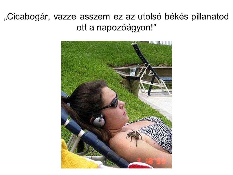"""""""Cicabogár, vazze asszem ez az utolsó békés pillanatod ott a napozóágyon!"""""""
