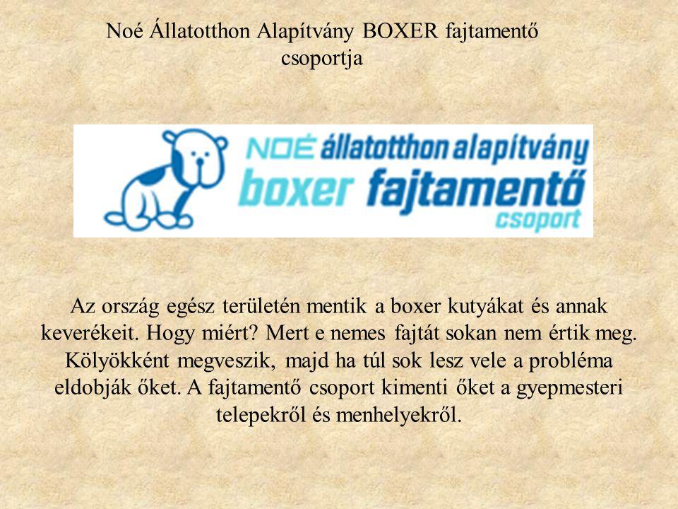 Noé Állatotthon Alapítvány BOXER fajtamentő csoportja Az ország egész területén mentik a boxer kutyákat és annak keverékeit. Hogy miért? Mert e nemes