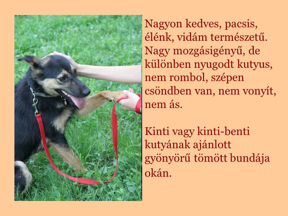 Nagyon kedves, pacsis, élénk, vidám természetű. Nagy mozgásigényű, de különben nyugodt kutyus, nem rombol, szépen csöndben van, nem vonyít, nem ás. Ki