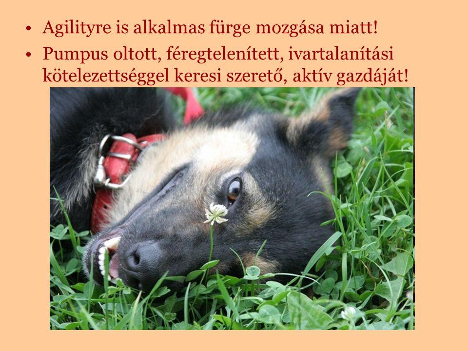 Érdeklődni lehet telefonon: 06 30 331 08 38 e-mailen: lazsofi@gmail.comlazsofi@gmail.com vagy a Pilis-Budai Kutyamentőknél a www.pilisbudaikutyasok.hu oldalon.