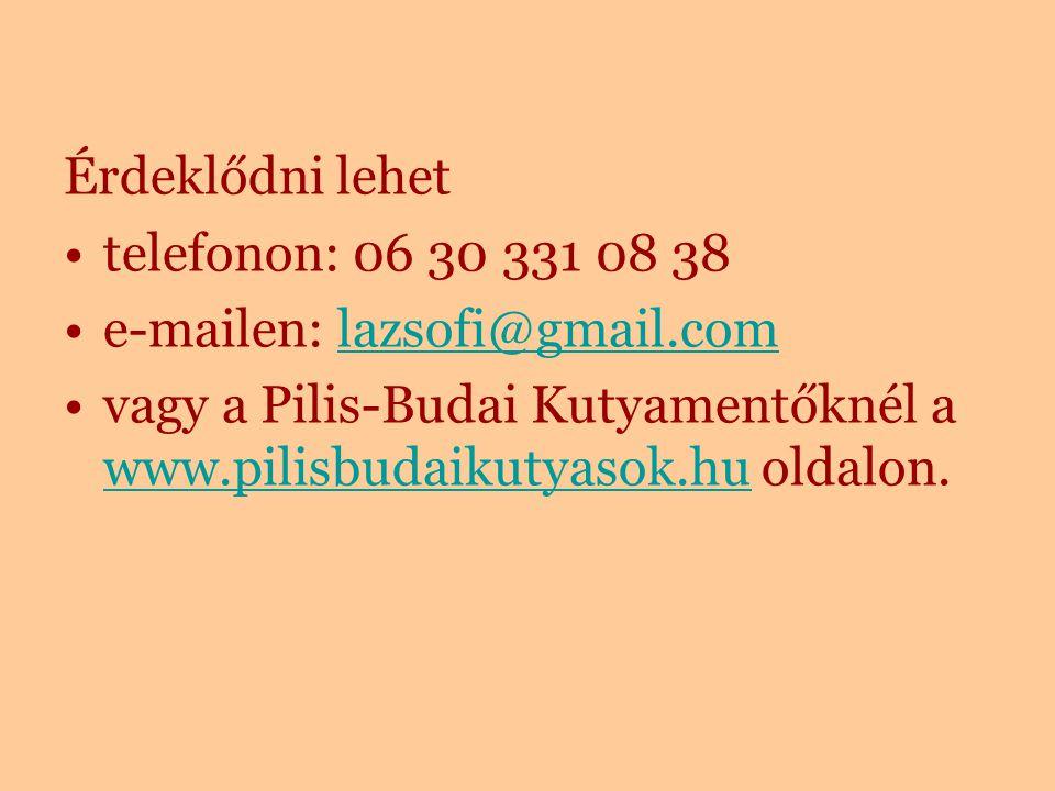 Érdeklődni lehet telefonon: 06 30 331 08 38 e-mailen: lazsofi@gmail.comlazsofi@gmail.com vagy a Pilis-Budai Kutyamentőknél a www.pilisbudaikutyasok.hu