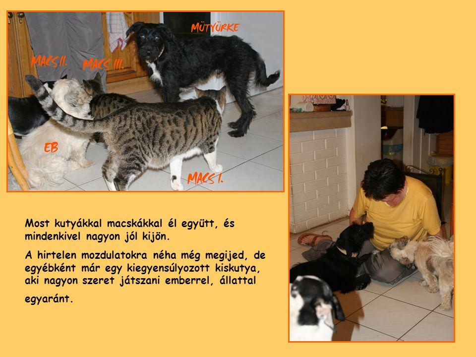 Most kutyákkal macskákkal él együtt, és mindenkivel nagyon jól kijön. A hirtelen mozdulatokra néha még megijed, de egyébként már egy kiegyensúlyozott
