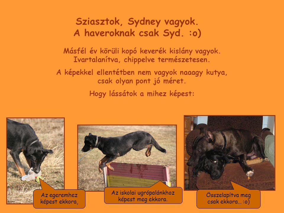 Sziasztok, Sydney vagyok. A haveroknak csak Syd. :o) Másfél év körüli kopó keverék kislány vagyok. Ivartalanítva, chippelve természetesen. A képekkel