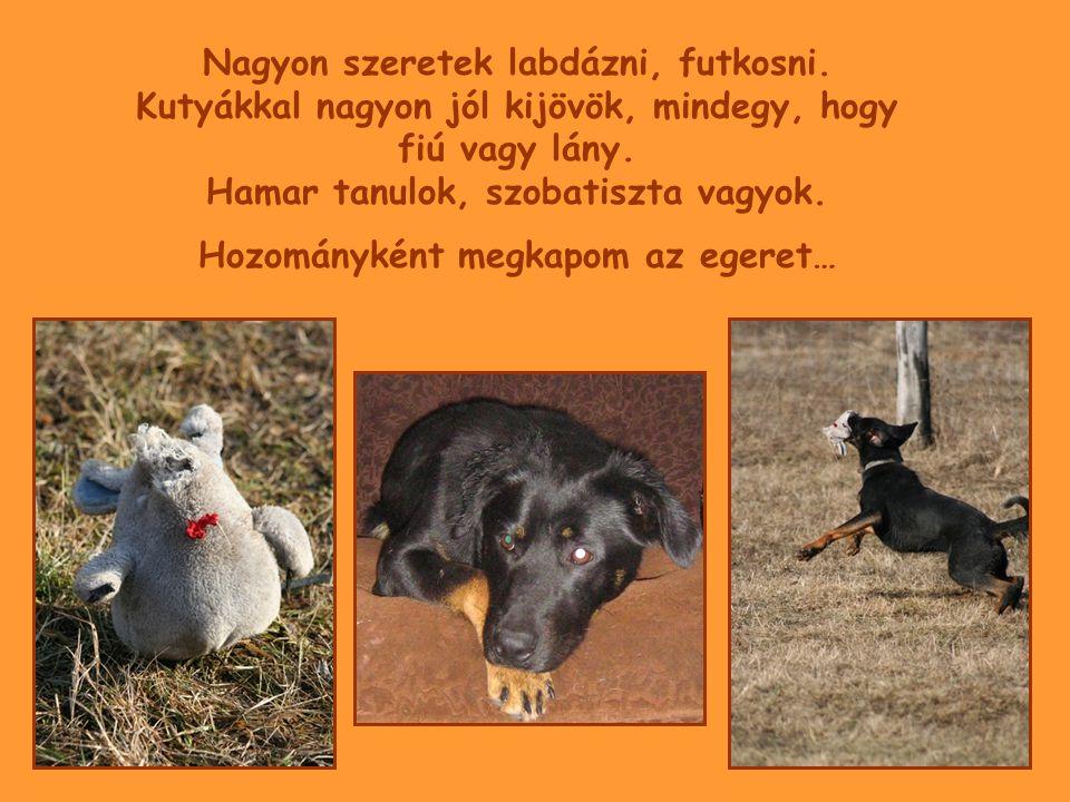 Sydeney felől érdeklődni lehet: 06-30- 944 2919 piliskutya@freemail.hu piliskutya@freemail.hu GALÉRIA: http://gallery.site.hu/u/Pilis-budai-kutyasok/Kutyusok/oscar/?g2_page=1 2009.