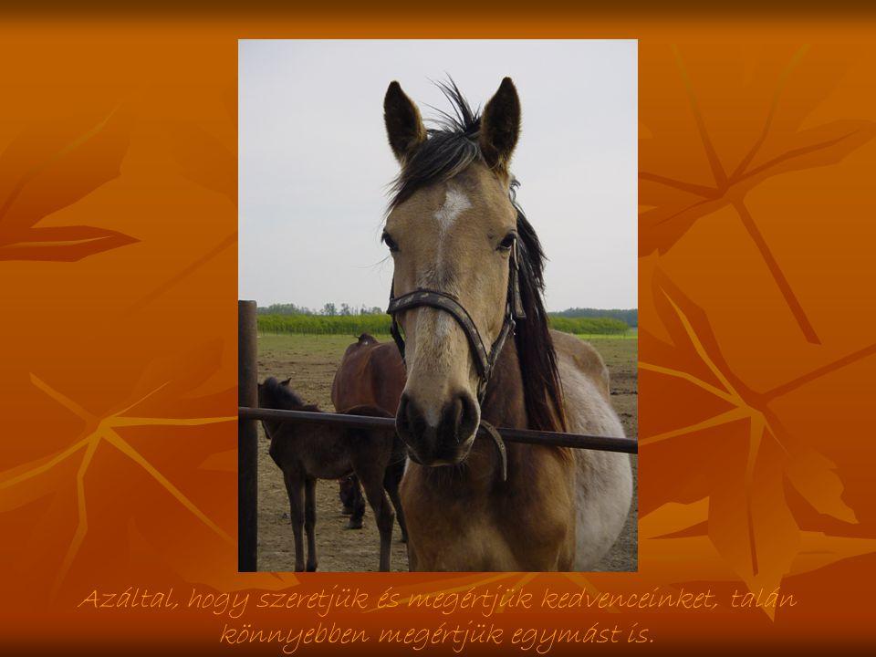 Ha egy ló társává fogad neked adja mindenét: erejét, kitartását, vad szellemét...