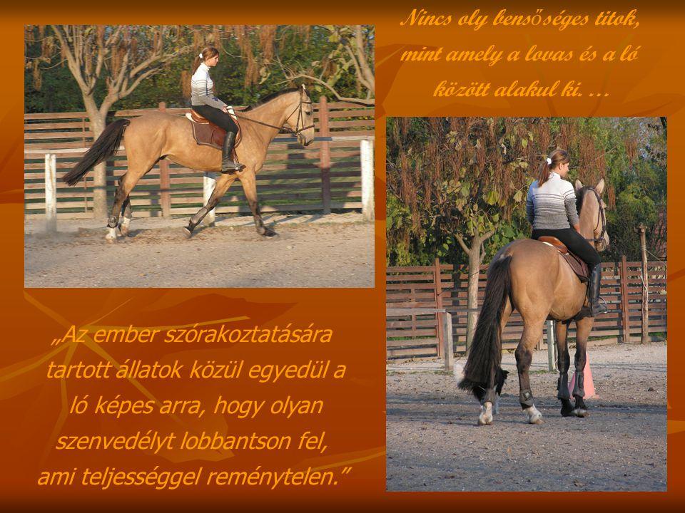 Nincs oly bens ő séges titok, mint amely a lovas és a ló között alakul ki.