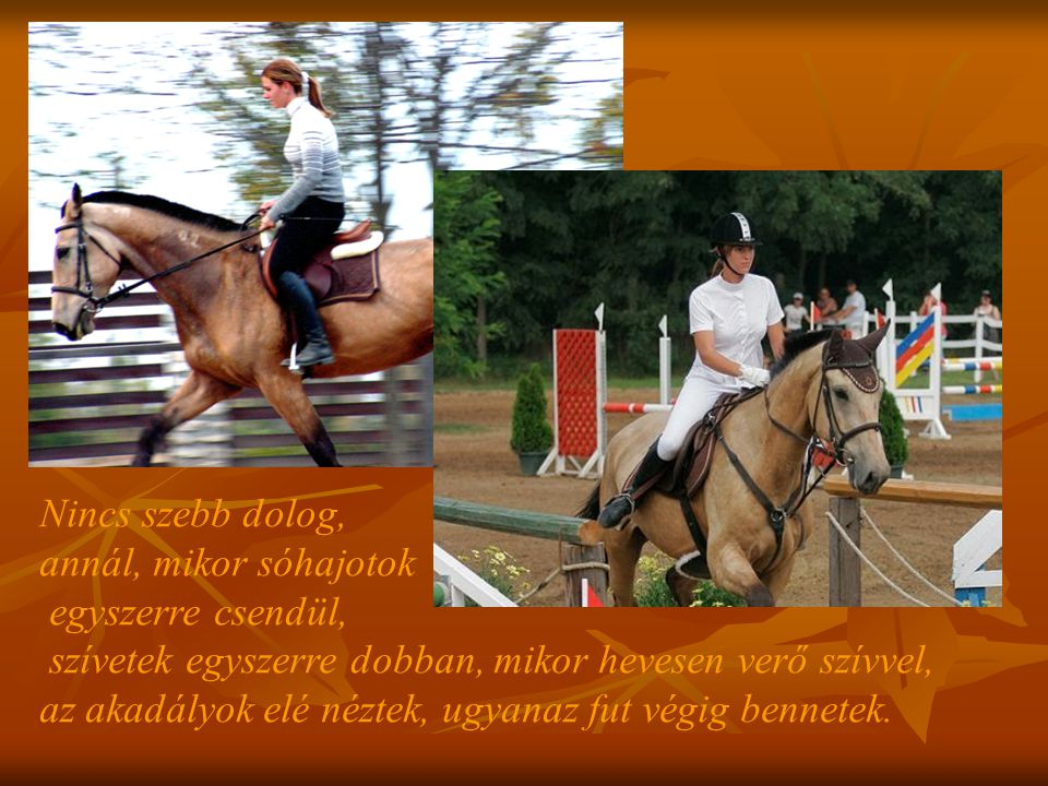 Nem az a nagy tréner, aki rá tudja venni a lovat arra, hogy megtegyen valamit.