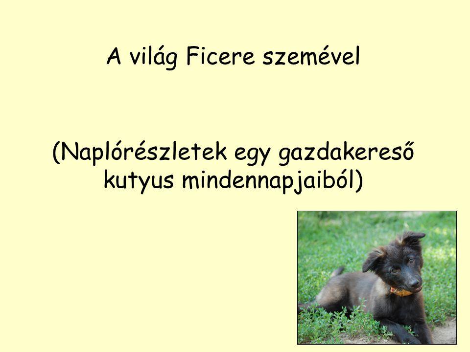 A világ Ficere szemével (Naplórészletek egy gazdakereső kutyus mindennapjaiból)