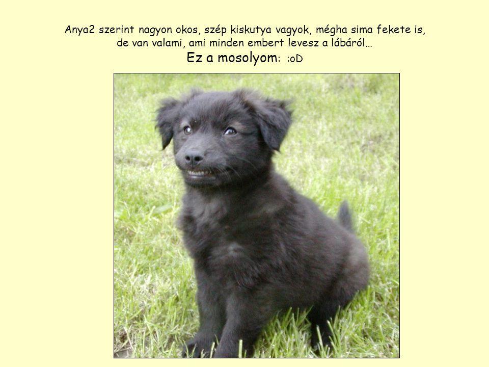 Anya2 szerint nagyon okos, szép kiskutya vagyok, mégha sima fekete is, de van valami, ami minden embert levesz a lábáról… Ez a mosolyom : :oD