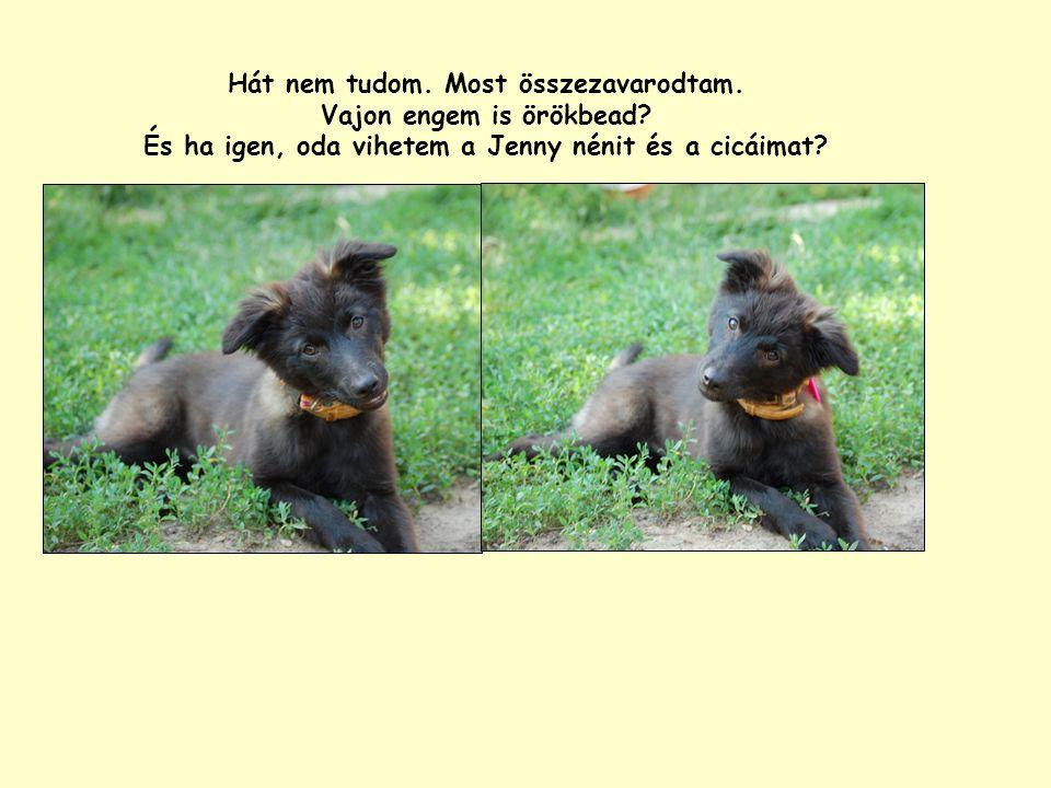 Hát nem tudom. Most összezavarodtam. Vajon engem is örökbead? És ha igen, oda vihetem a Jenny nénit és a cicáimat?