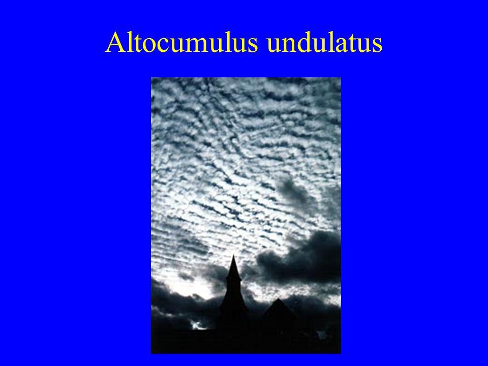 Altocumulus undulatus