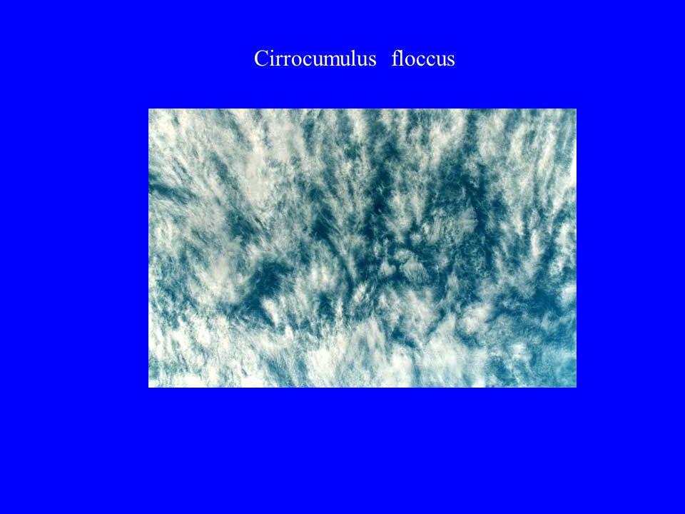 Cirrocumulus floccus