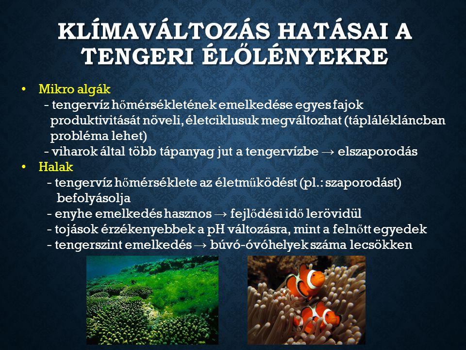KLÍMAVÁLTOZÁS HATÁSAI A TENGERI ÉLŐLÉNYEKRE Mikro algák - tengervíz h ő mérsékletének emelkedése egyes fajok produktivitását növeli, életciklusuk megv