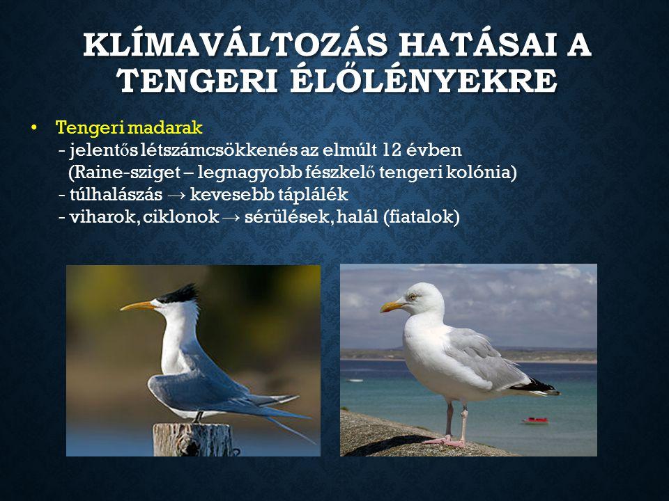 KLÍMAVÁLTOZÁS HATÁSAI A TENGERI ÉLŐLÉNYEKRE Tengeri madarak - jelent ő s létszámcsökkenés az elmúlt 12 évben (Raine-sziget – legnagyobb fészkel ő teng